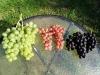 Vynuogių kekės