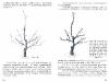 vynuogiu-auginimas-_page_15
