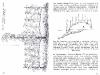 vynuogiu-auginimas-_page_17_2